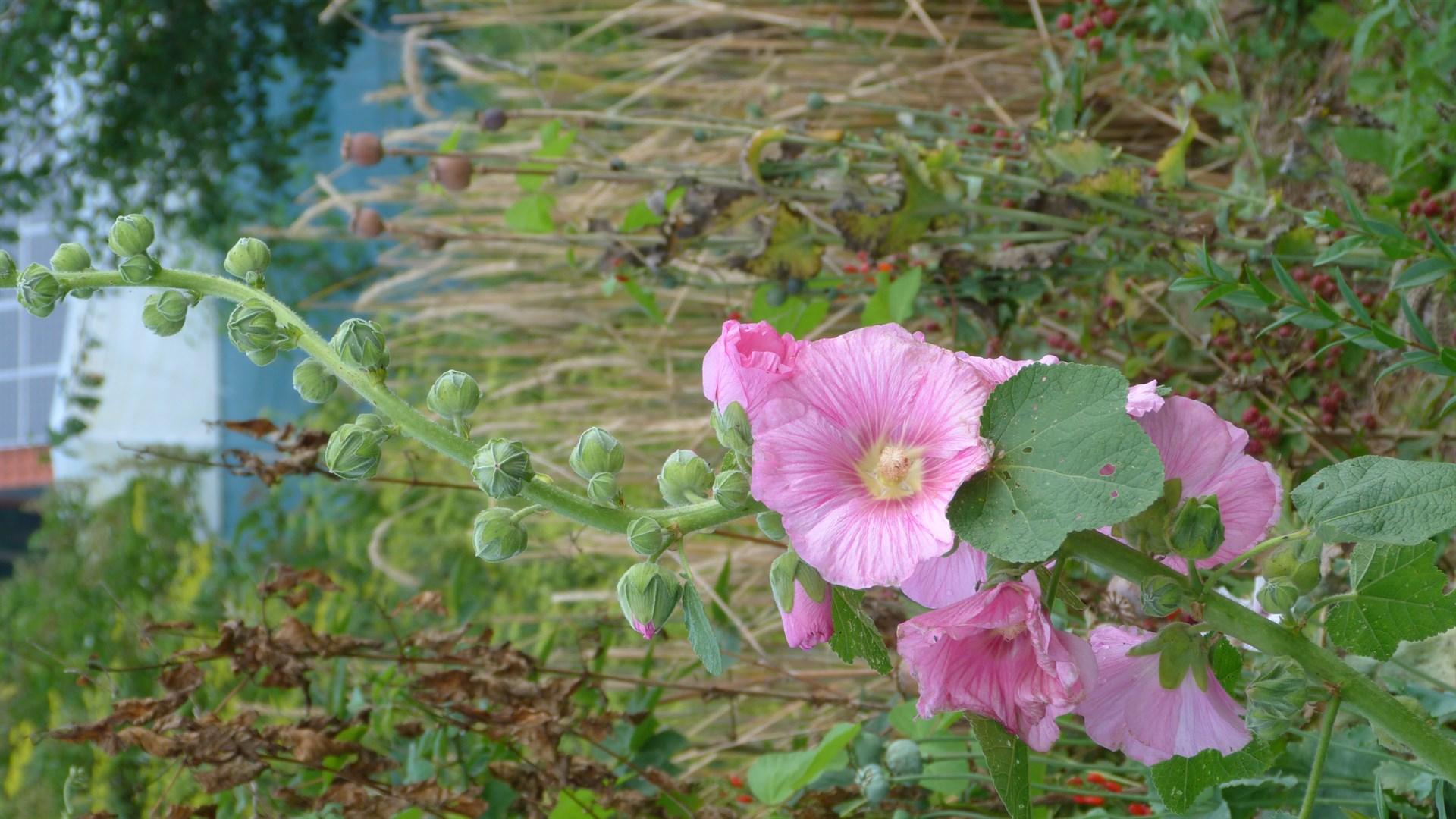 Wildpflanzen biotop permakulturpark am lebensgarten steyerberg - Einheimische pflanzen im garten ...