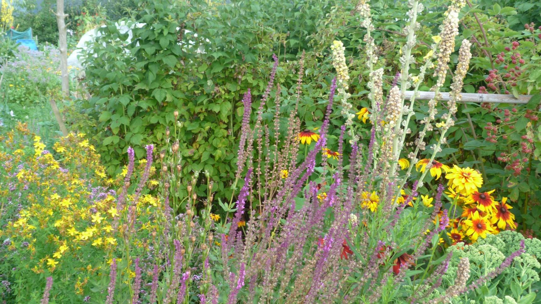 Wildpflanzen Biotop